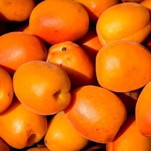 A. Spécifiques : Fruits noyaux